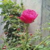 莹莹家的小花